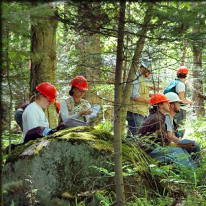 Forestry and Environment Management Writing Service